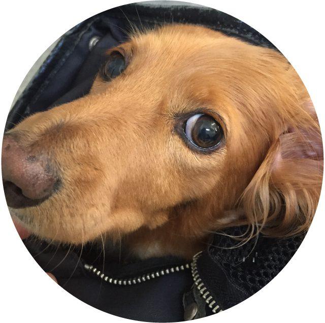 6月11日は『SAVE THE YOUR PET'S EYE 』