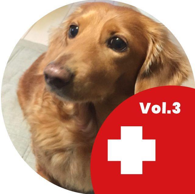 8月11日ペットと幸せに生きるイベント Vol.3 ペットを救え!! ペット救急員養成講座開講!!